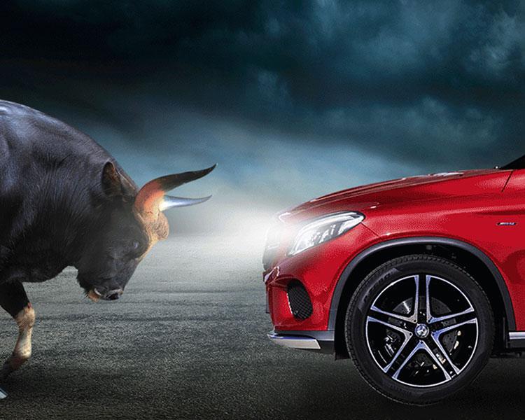 2021-horns-hp